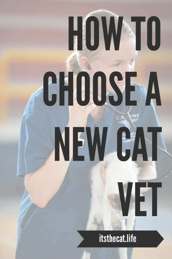 how to chose a new cat vet