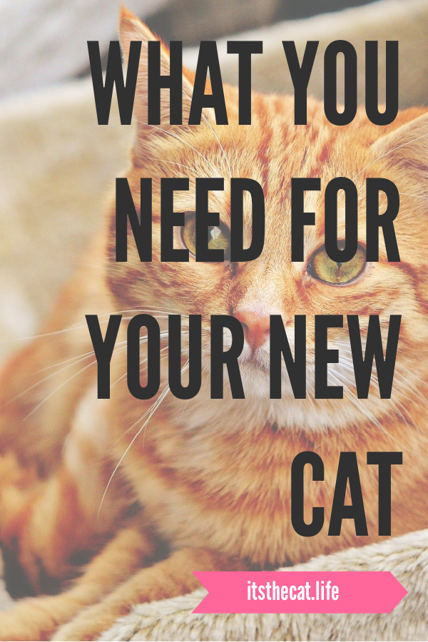 what you need for your new cat