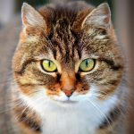 five reasons to adopt a cat