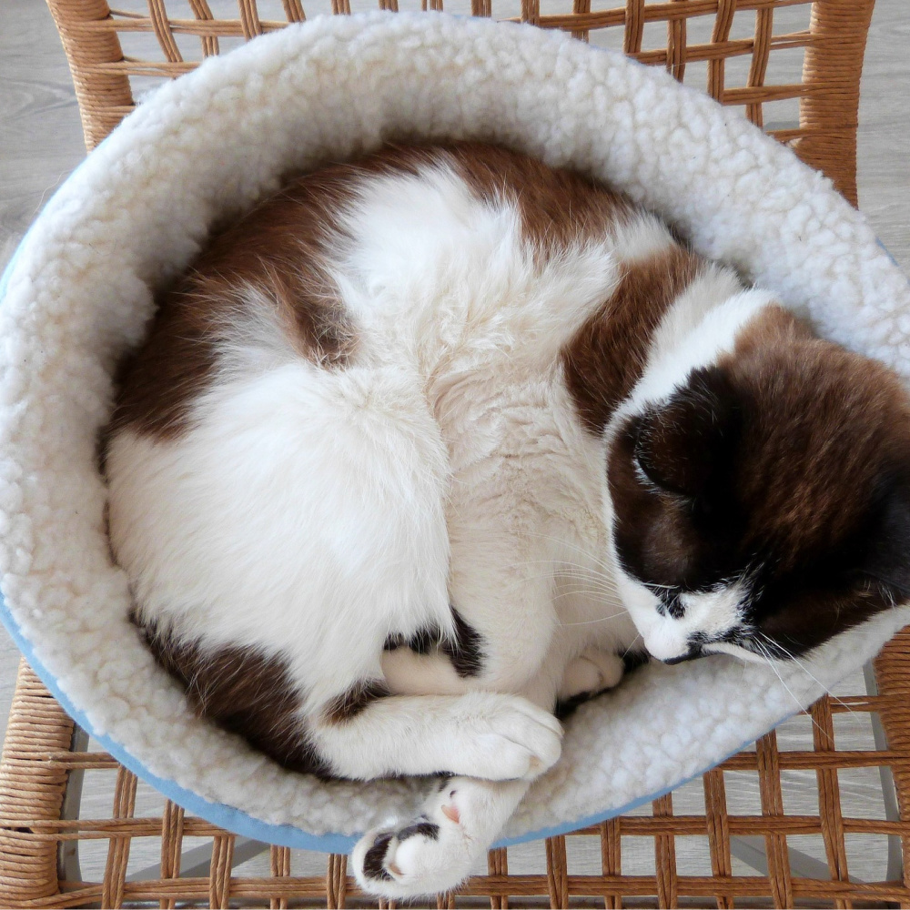 The Best Cat Beds Of 2021