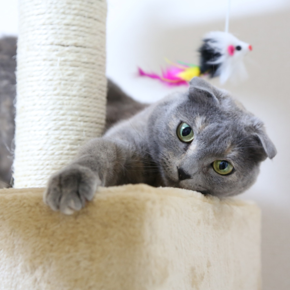 why we love our cat trees