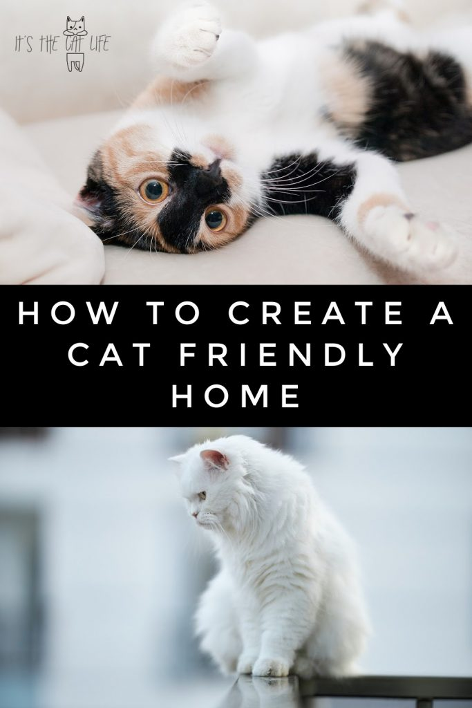 how to create a cat friendly home