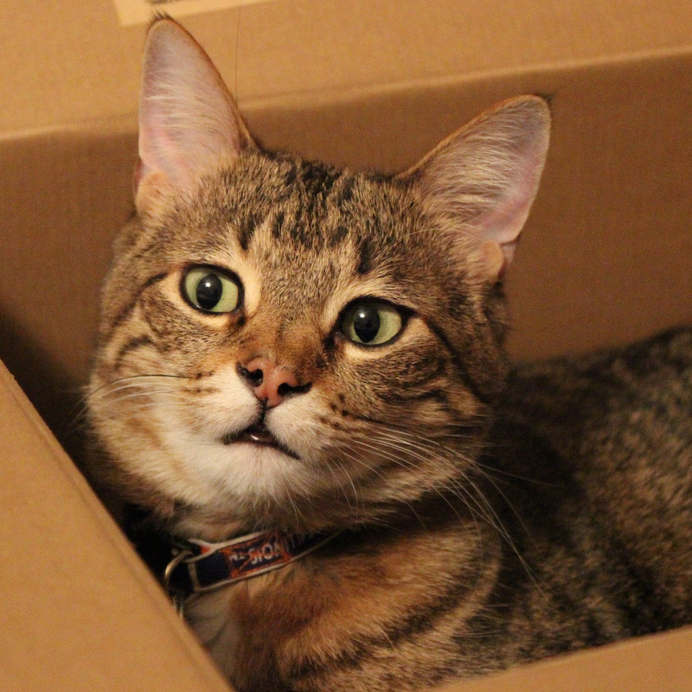 How To Add Fun To Your Cat's Life With A Subscription Cat Box